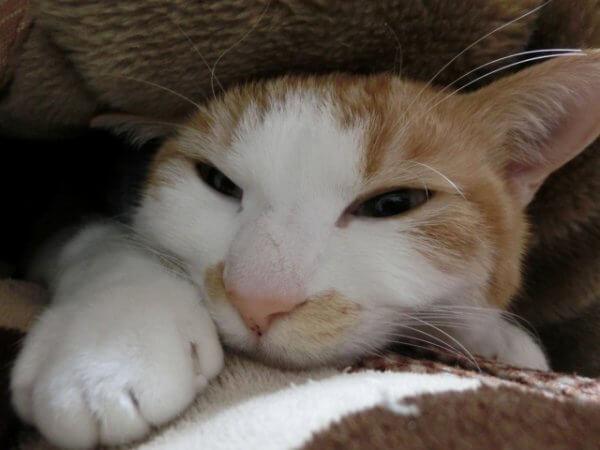 ひきこもりの猫
