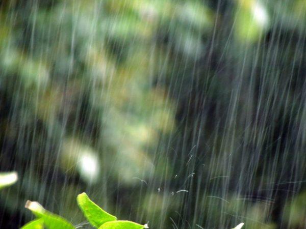 晴雨兼用できる超軽量日傘とは