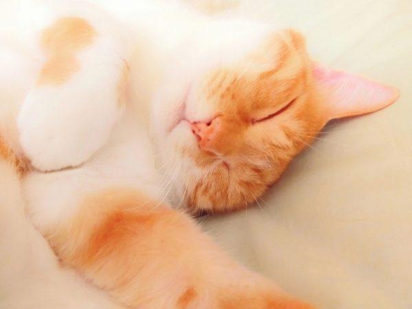 ③ 十分な睡眠時間を確保する