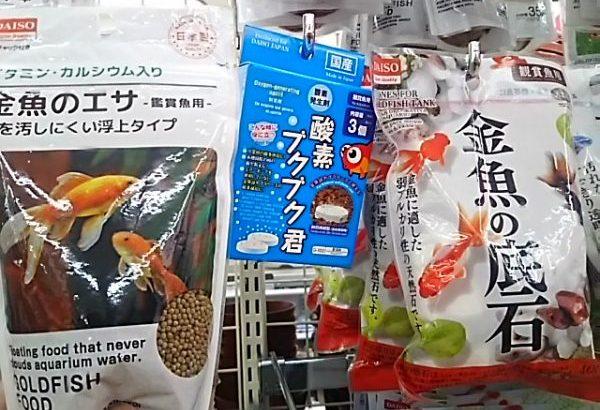 金魚の世話を440円で始める方法!ダイソーの金魚鉢ですくすく成長