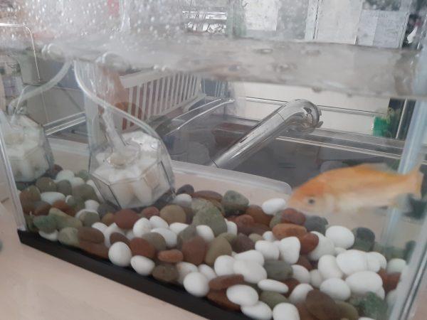 金魚の世話 水槽