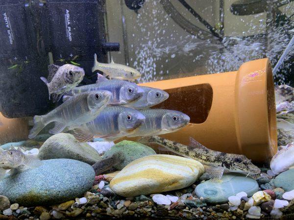 魚を飼育している水槽